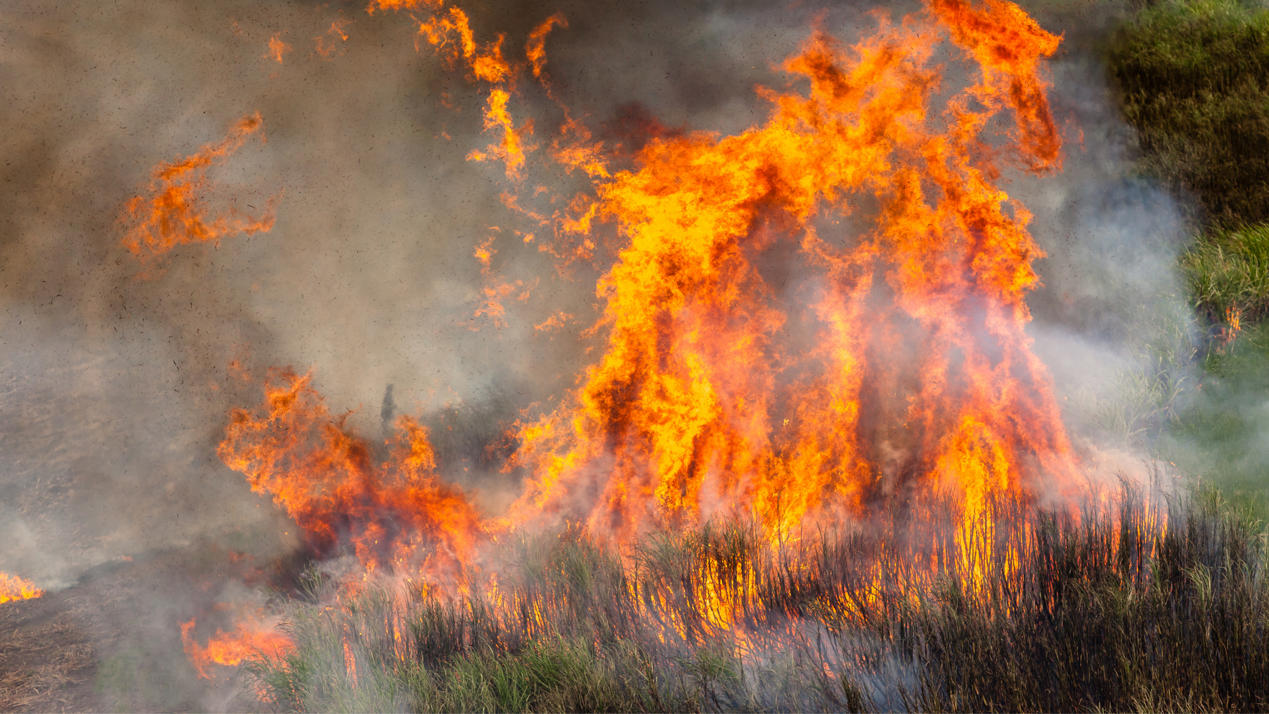 You are currently viewing Preparation and organisation are crucial for ensuring a safe and effective burn says New Zealand's leading Rural Consultants for AgSafe New Zealand Ltd.